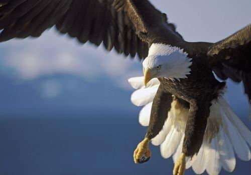 Орел в сънищата